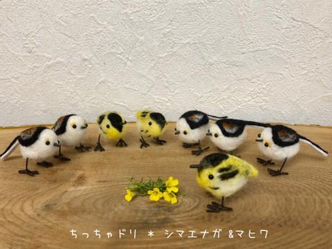 ちっちゃドリ〜ケイマフリ、シマエナガ、マヒワなど^^