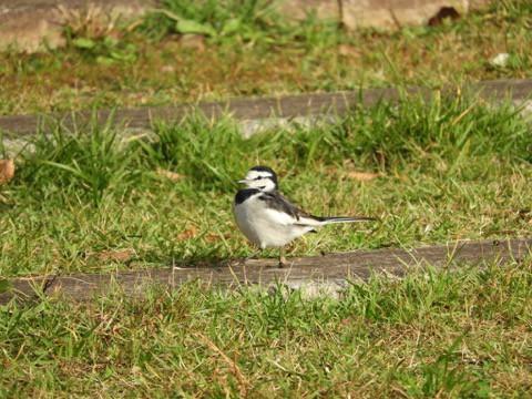 旅先で出会った野鳥!