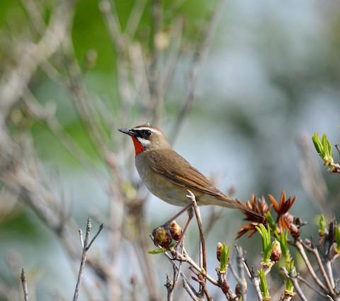 動画『鳥達の謌 ~ 北の森の物語 ~』