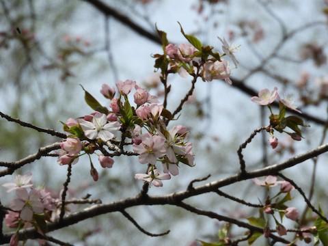 春の草花たち *