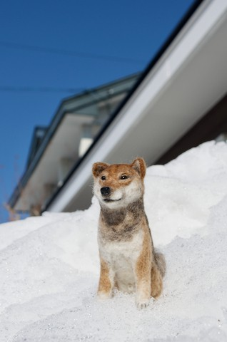羊毛フェルトで柴犬のすい君!
