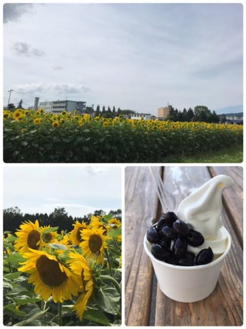 おとふけ道の駅の黒豆ソフトと十勝川温泉のひまわり畑