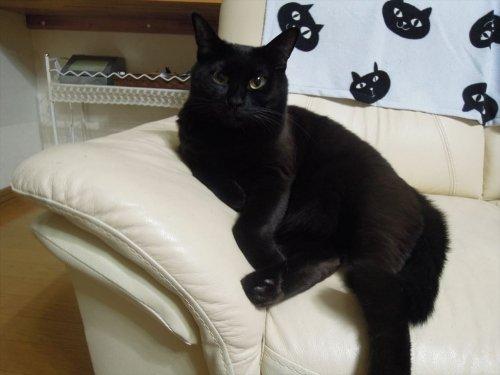 のんびりや食堂さんでランチとかレジンで蘇った愛猫