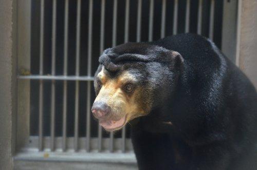 マレーな旅 東山動物園
