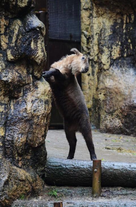 初めての多摩動物公園