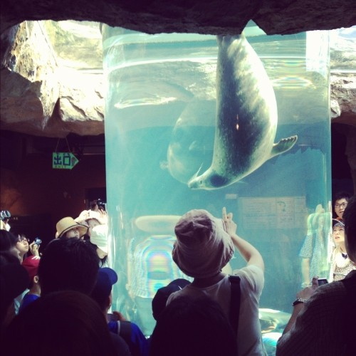 旭山動物園に行ってきました