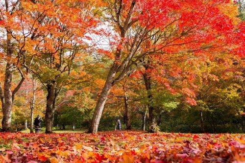 福原山荘に行ってきました
