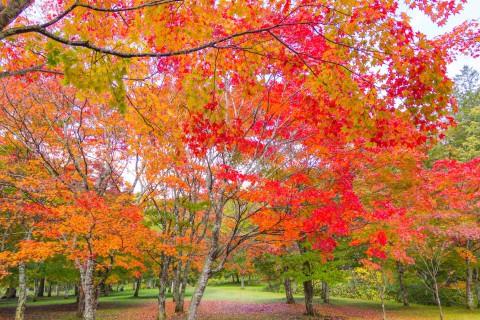 紅葉の名所「福原山荘」一般公開 2019