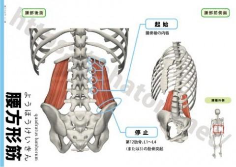 今月もやりますっ!解剖の復習。