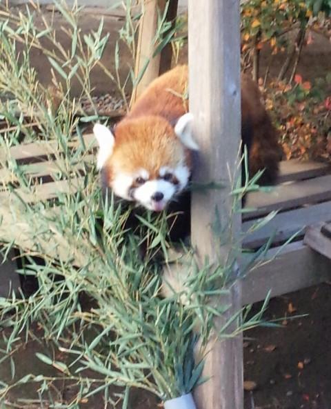 浜松市動物園のイケメン