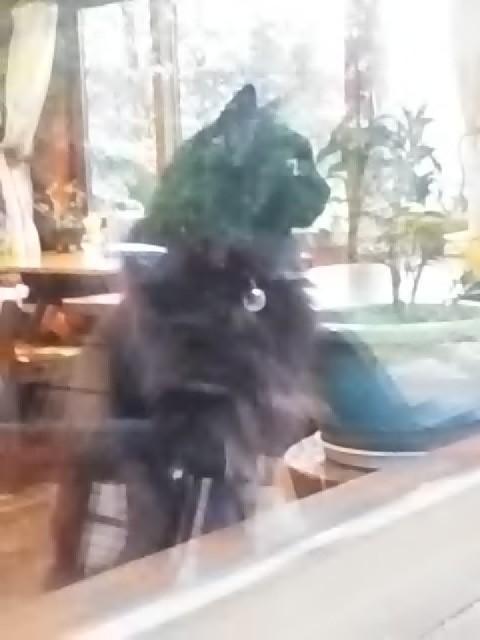 看板猫が行く~風は秋色