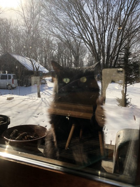 看板猫が行く~冬のある日の唄