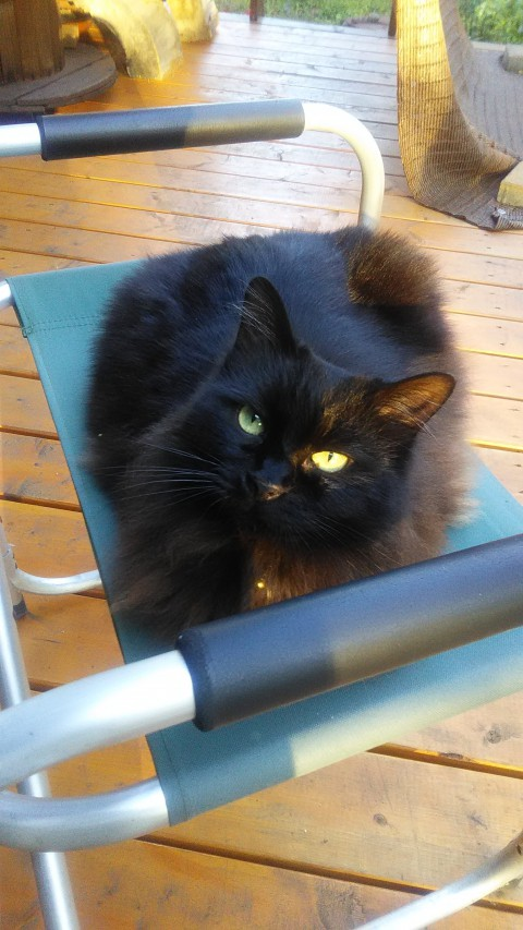 看板猫が行く~暑中お見舞い申し上げます