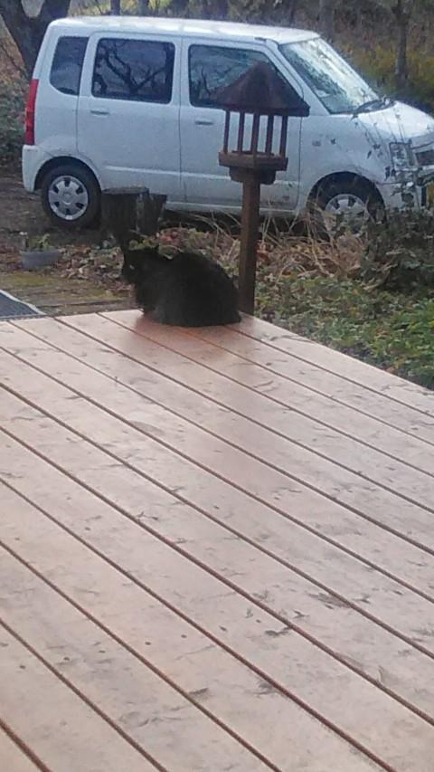 看板猫が行く~冬がはじまるよ