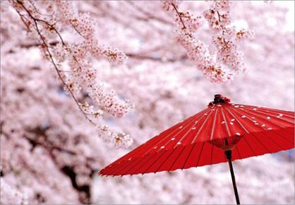 出会いの春