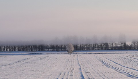 カメラスケッチ~続続氷点下18度の朝