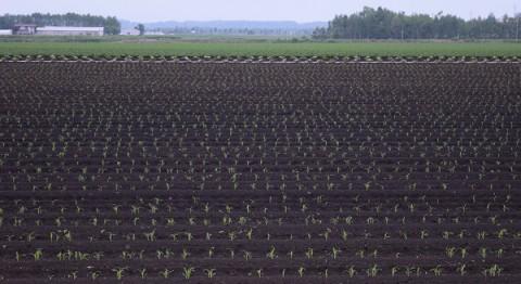 農作物の生育は順調…