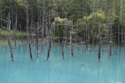 カメラスケッチ・美瑛町白金の青い池