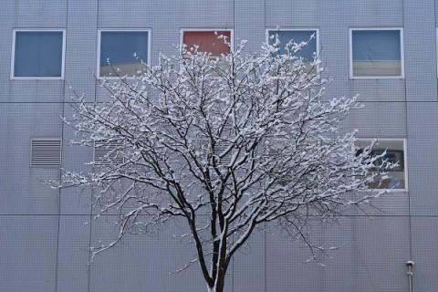 ちょっと多めのなごり雪