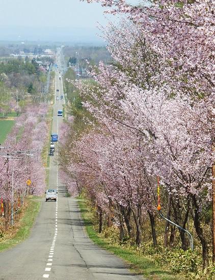 中札内桜六花公園に行ってきました~♪