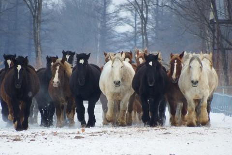 音更町駒場の牧場で「馬の追い運動」始まる
