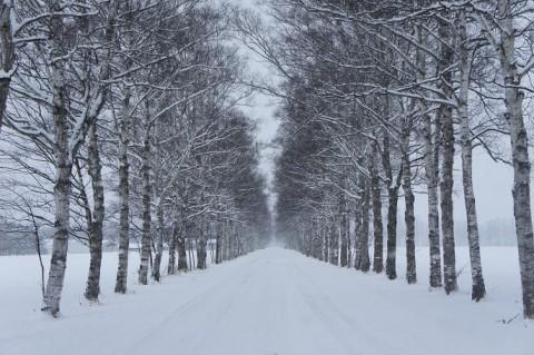 積雪30cm弱~♪