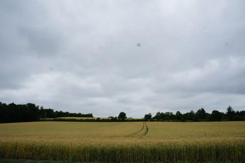 カメラスケッチ・芽室町の畑