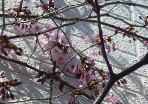 春のツーリング♪