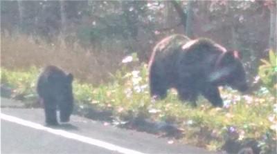 知床峠の熊と、頑張ってもうまくいかない人はどうしたら楽になるのか?