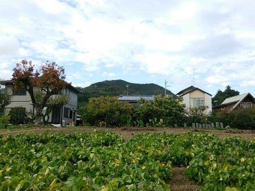 日和田山+おまけの10月桜