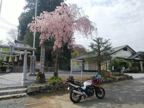 浦山ダムカレー