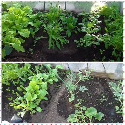 Vegetable garden 始動!?