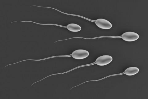 男性不妊について ~精子の異常、加齢との関係~