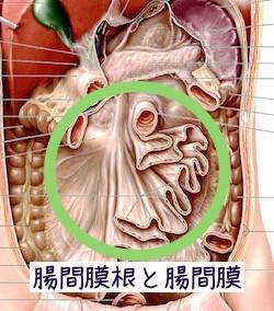 手術が身体に及ぼす影響