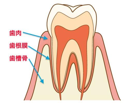 歯とオステオパシー