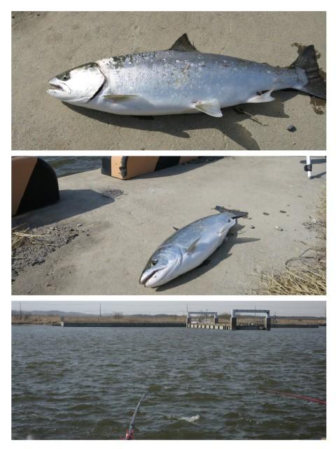 ニシン釣りたくて~‼️ 大津漁港へ....