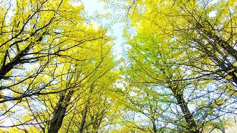 十勝 紅葉 最前線 ・・・ 紅から黄、そして黄金色に~~(^^♪