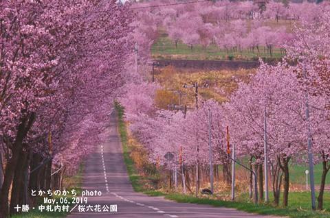 十勝、桜紀行・・・満開桜との出逢い~♪