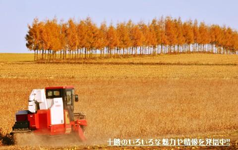 まさに黄金色の大地・・・晩秋の十勝は素敵な風景で溢れている!!