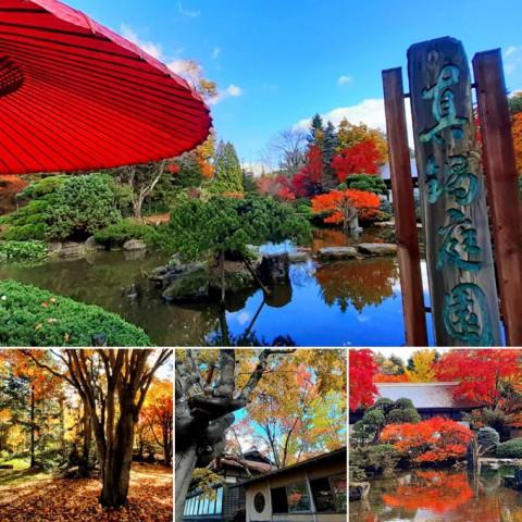 和風庭園の紅葉・・・十勝なのに…ここは京都か?