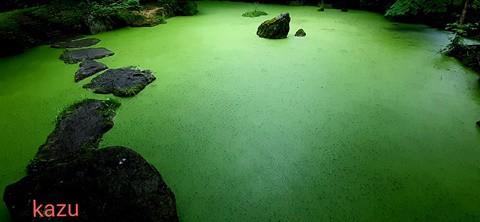 あの青い池(美瑛町)ならぬ … 緑の池が帯広にあった!?
