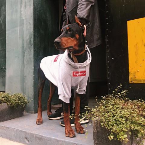 シュプリーム 犬服グッチ 犬の服 シャネル パロディ 高級ブランド