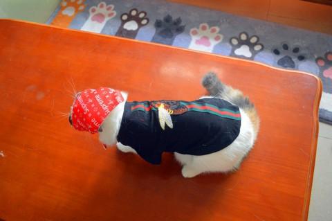 シュプリーム 犬服 グッチ 犬の服 おしゃれな犬服 人気の犬服ブランド