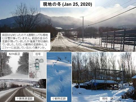 現地 1月(再び雪なし)