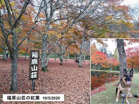 鹿追町 福原山荘の紅葉は終盤だが