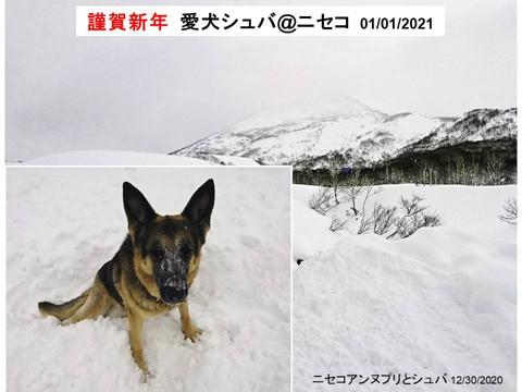 ニセコの愛犬シュバ