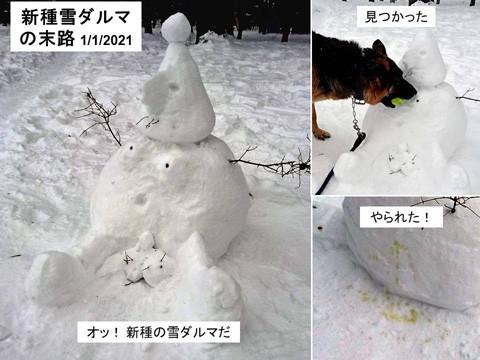 新種の雪ダルマ その後は?