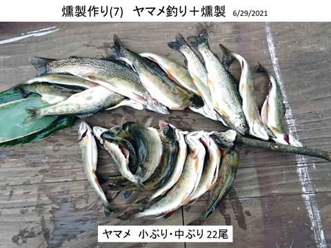 燻製作り(7) ヤマメ釣りと燻製 大成功