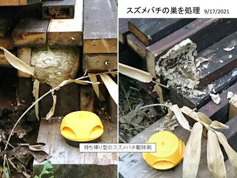 スズメバチの巣を処理