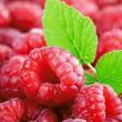 冷凍ラズベリー(100gあたり) 品種混み